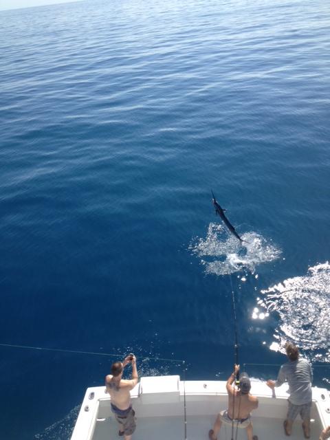 Nov 2013 Jumping Sail