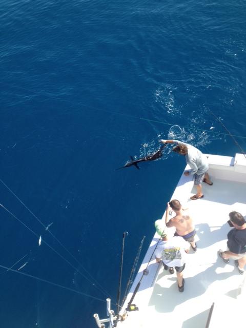 Nov 2013 Sail release