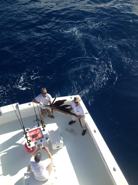 Nov 2013 holding sail