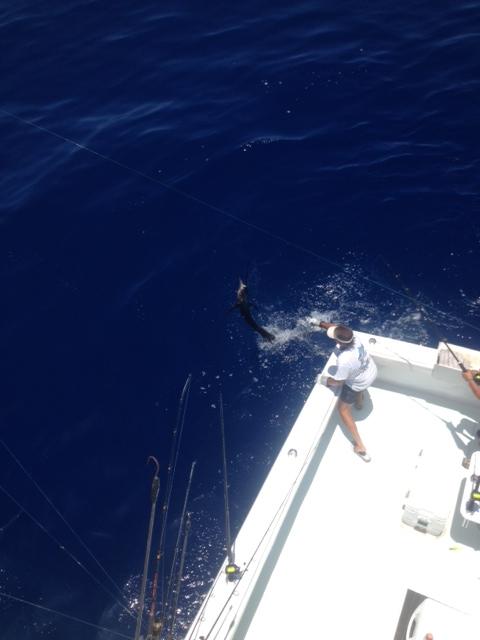 Stan's jumping Sail