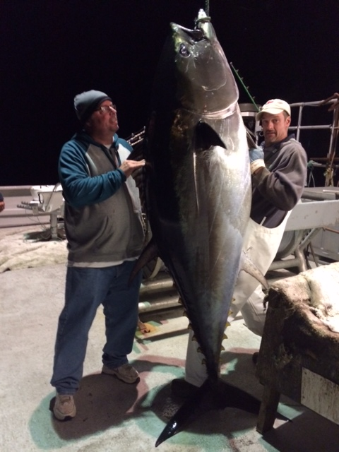 Nova Scotia tuna 2014