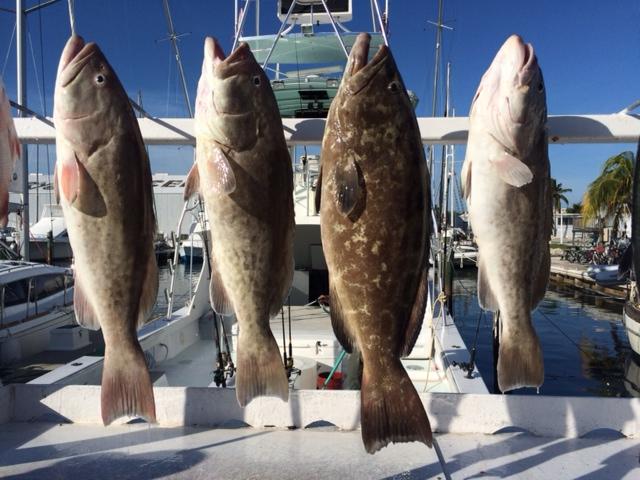 4 grouper