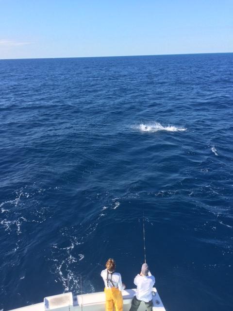 Jumping Sail