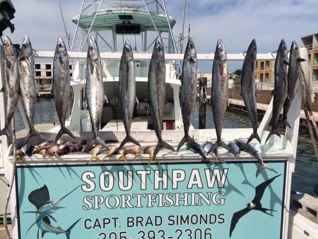 Key West Kingfish