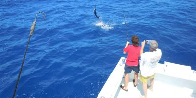 Sailfish jumping out of the water of the stern