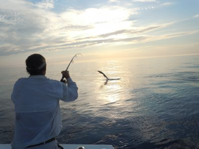 jumping sailfish from a southpaw fishing charter