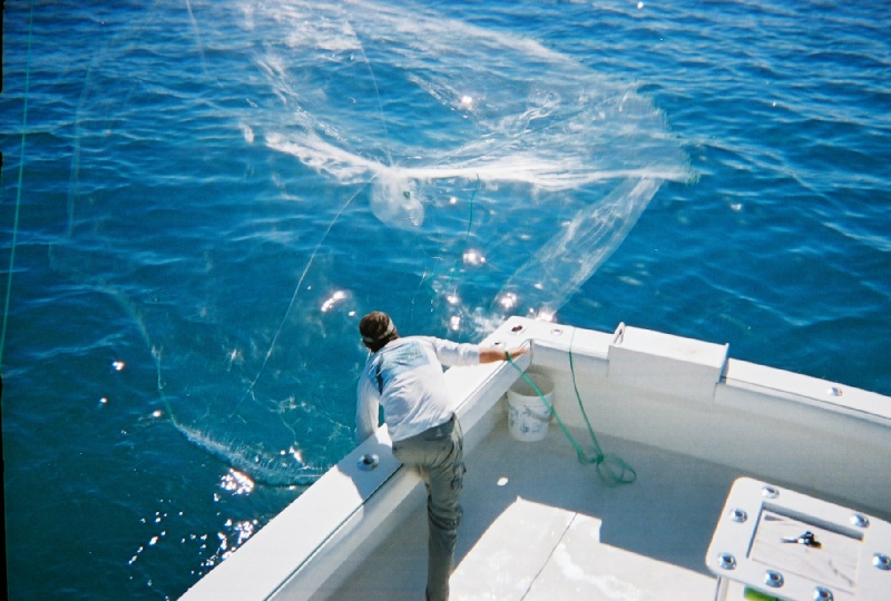 throwing a big cast net catching bait