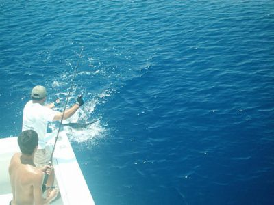 Boating a marlin in Key West waters