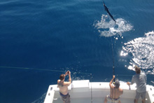 Jumping sailfish in the Florida Keys waters
