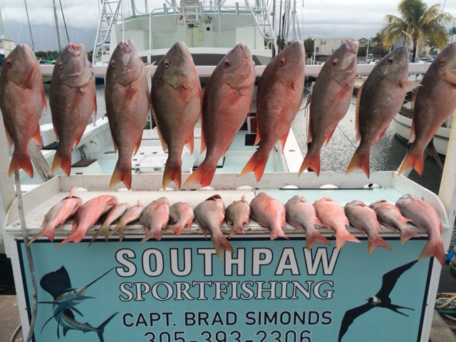20 mutton snapper hanging on the cutting table
