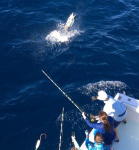 Sailfish off the stern of a Southpaw key west fishing charter